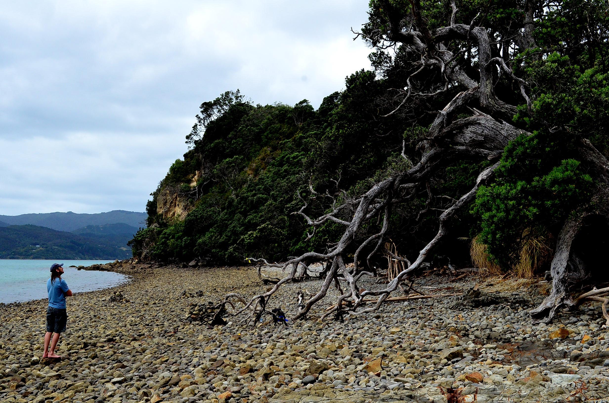Ufficio Visti Nuova Zelanda : Sfatando alcuni miti sul lavorare in nuova zelanda u2013 exploremore